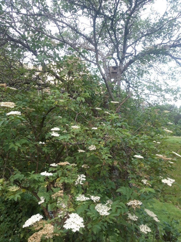 nichoir à mésange dans arbre