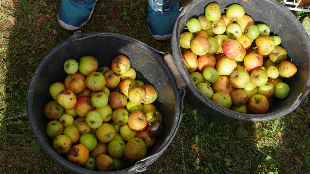 pommes à jus