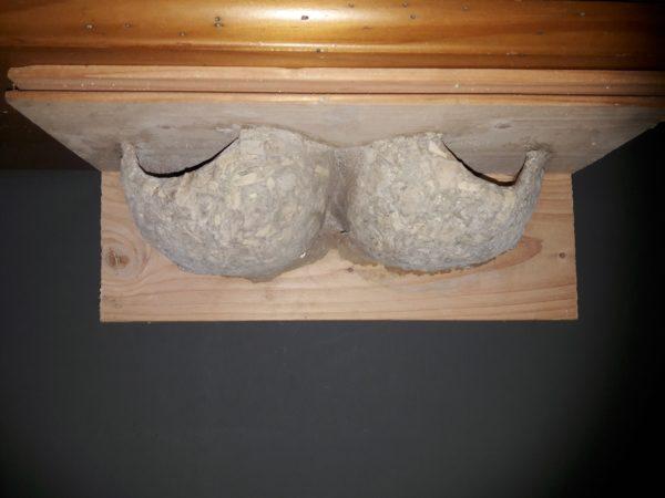 double nichoir à hirondelles