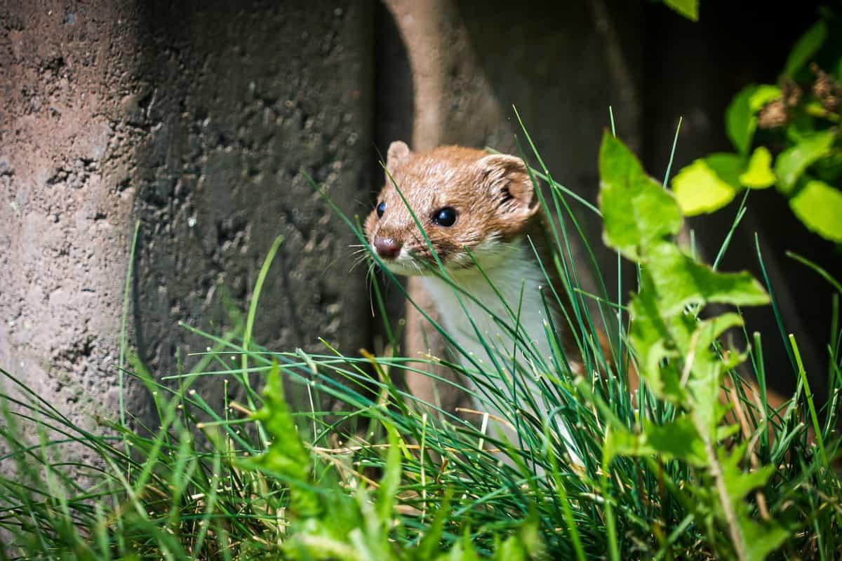 nichoir petits mammifères
